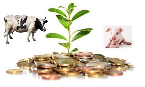 Получение субсидий в сельской местности